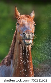Red horse is washed of water with hose on a hot summer day