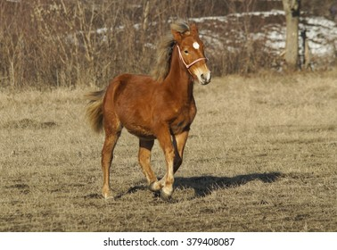 red horse with a white blaze running on the field