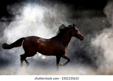 Red horse in the white mist.