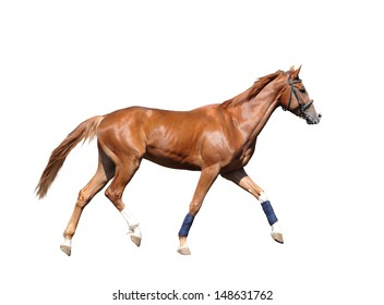 Red horse with white socks isolated on white