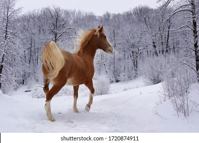 red horse in the winter forest