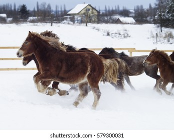 red horses with a white blaze on his head standing in the snow in winter paddock
