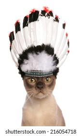 red indian cheif adult cat