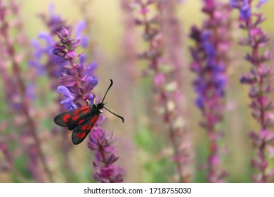 Red insect on the flower.
