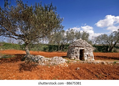Red Istrian soil, stonemade shelter and olive trees