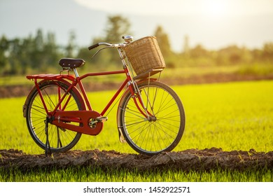 Red Japan style classic bicycle at view of green rice field in sunset time
