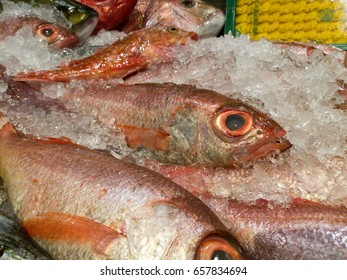 red japanese fish on ice