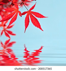 Red japanese maple leaves, water reflections