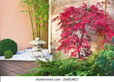 Red japanese maple tree in a zen garden