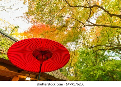 Red Japanese umbrella in forest. Natural oriental background