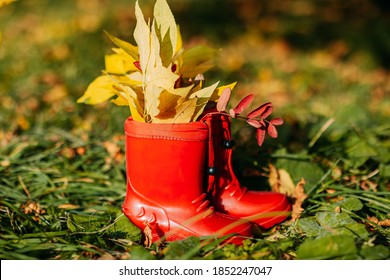 Red kids gumboots with yeallow leaves inside. Autumn coziness with foliage inside the boots. Golden forest.