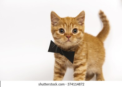 Red kitten with butterfly tie on white background