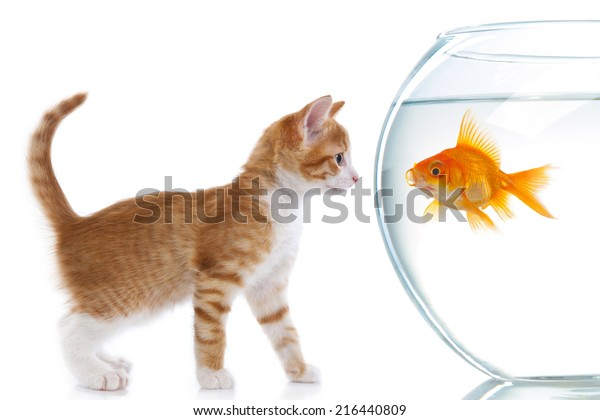 https://image.shutterstock.com/image-photo/red-kitten-looks-goldfish-who-600w-216440809.jpg