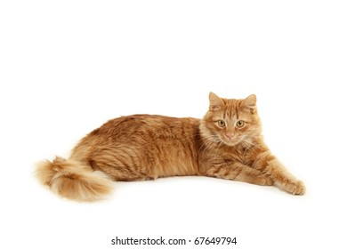 red kitten lying down isolated on white background