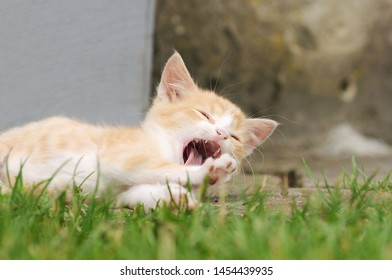 red kitten lying on meadow in the garden and yawn