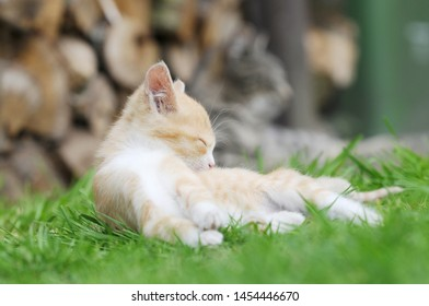 red kitten lying on meadow in the garden and sleep