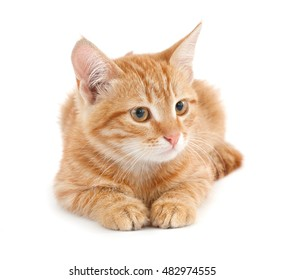 Red kitten on white background