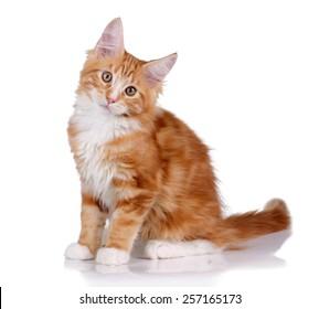 Red kitten sitting on white background