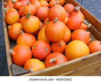 Red Kuri (Hokkaido) squashes in a giant wooden box at a farmers market. Red Kuri, also known as Japanese Squash, is a winter squash that has the appearance of a small pumpkin without the ridges.