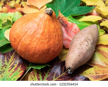 A Red kuri squash and a sweet patato (seasonal vegetable) are placed on autumn leaves in green, red, orange and yellow colours. Close-up.