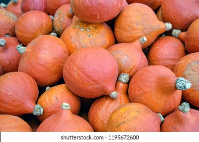 Red kuri squashes or Hokkaido, Red Hokkaido and Sweet Meat (Cucurbita maxima Duchesne ssp. maxima convar). Orange colored small pumpkins, background, closeup