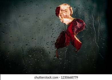 Red leaf behind the window wet from the rain