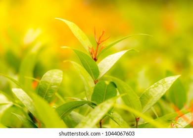 the red leaf ,Below is a green leaf.