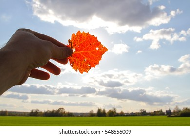 Red leaf in the hands against the blue sky