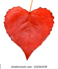 Red leaf heart isolated on white background