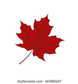 Red leaf illustration on white background