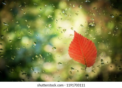 Red leaf on glass with water drops on blurred background.
