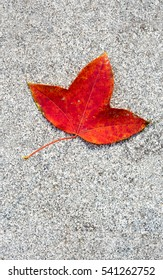Red Leaf on the grey concrete background vertical