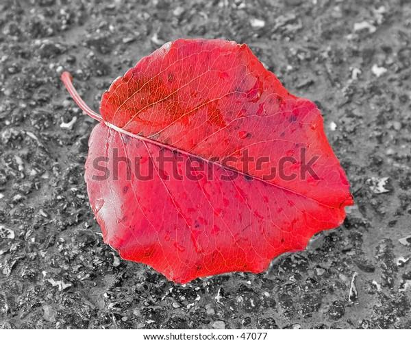 Red leaf on street.