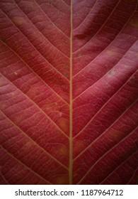 red leaf pattern background
