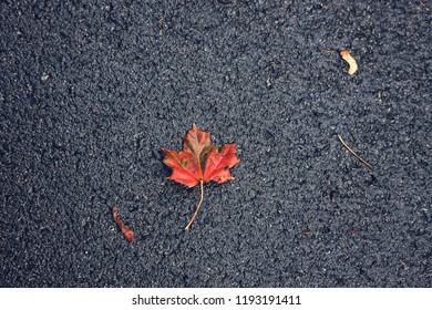The red leaf. The rain