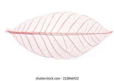Red leaf skeleton background