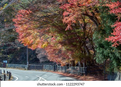 Red leaves around Mount Fuji in the autumn on daytime at Kawaguchiko lake, JAPAN.