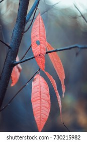Red leaves. Autumn background