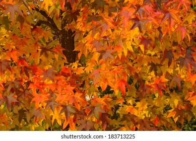 Red leaves in autumn - Fall warm colours