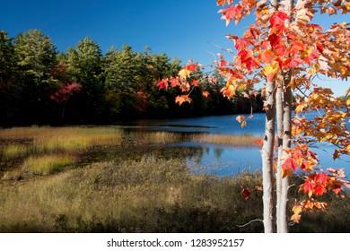 Red leaves, autumn, Somes Pond, Mount Desert Island, Maine, USA