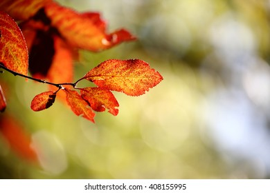 red leaves with beautiful bokeh. local focus