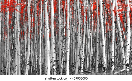 Red leaves in a black and white forest landscape