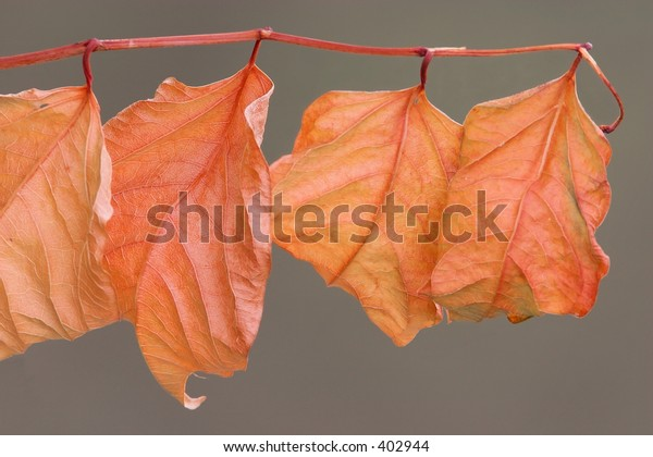 Red leaves, found in the late spring at the river ruhr.