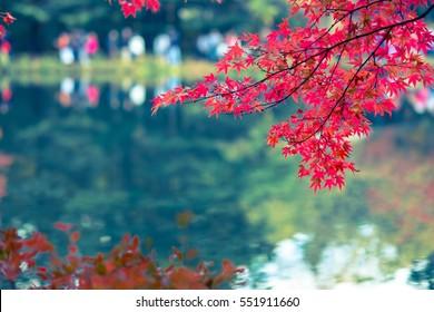 Red Leaves of the Lake Side at Japan Karuizawa-2