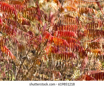 red leaves in nature autumn