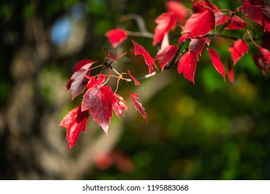 red leaves on a green background
