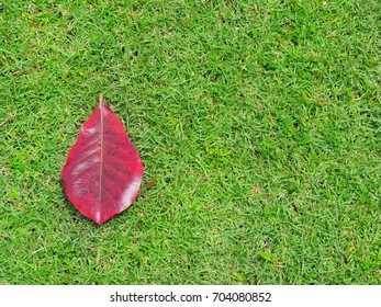 Red leaves on the lawn