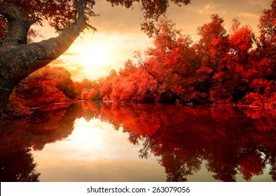 Red leaves on trees along the river in autumn