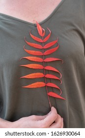 Red leaves of a plant against the background of a woman's body s