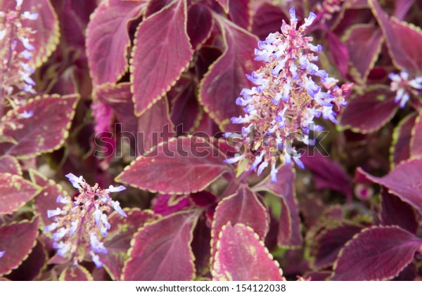 red leaves and purple flowers